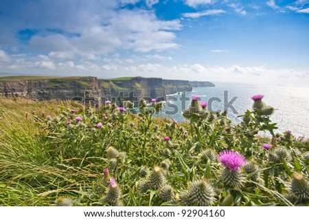 Cliffs of Moher, Ireland with thistle in the front of image The Cliffs of Moher - one of the most popular tourist destinations in Ireland - almost one million visitors per year - stock photo