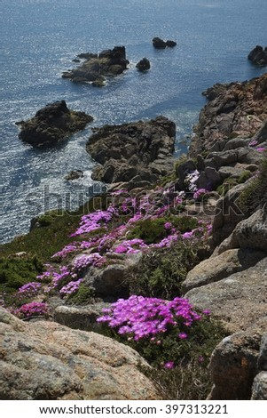 Cliffs with Midday Flowers, Jersey, English Channel