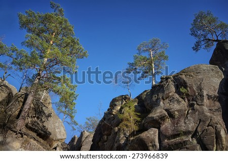 Cliffs with pine trees growing on them                              - stock photo