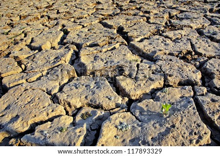 Climate change. Desertification. - stock photo