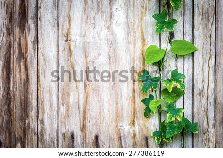 Climber plant on wood plank - stock photo