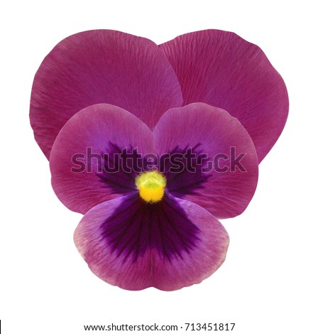 clipart made natural violet pansy flower stock photo 100 legal rh shutterstock com Pansy Flower Pansy Outline