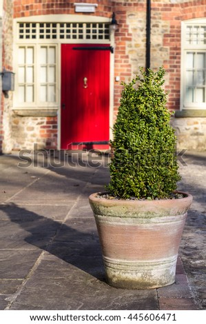 Clipped box tree in traditional terracotta pot - stock photo
