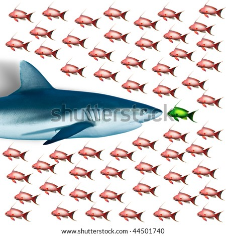 Clipped fish on white background with a shark, Red Sea