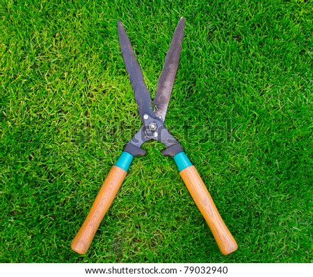 Clippers on the green grass - stock photo