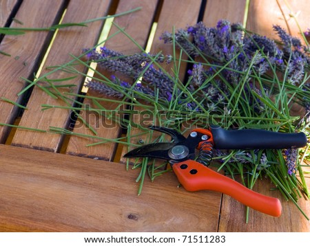 clippers, secateurs garden shears on grass - stock photo
