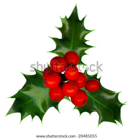 Clipping path. a sprig of holly isolated on a white background - stock photo