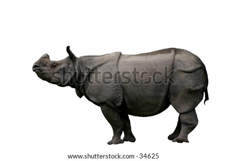 clipping path rhinocerous