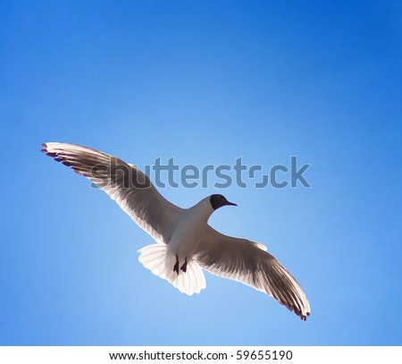 Clipping Path. Seagull against the blue sky. In free flight. - stock photo