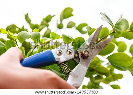 Clipping top of tree in the garden - stock photo