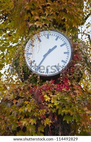 Clock on the autumn tree - stock photo