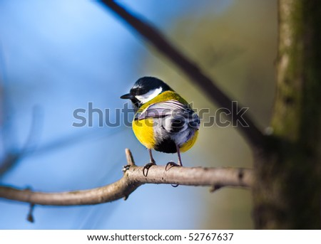 Close bright tit on a branch - stock photo