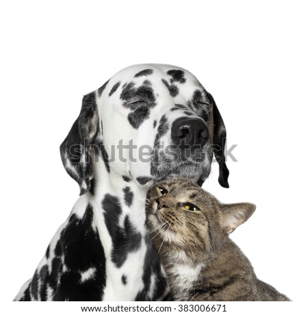 close friendship between a cat and a dog - stock photo