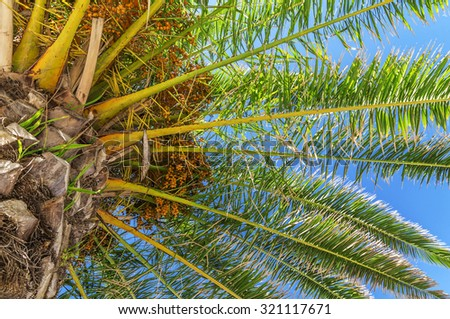Close palm tree in blue sky