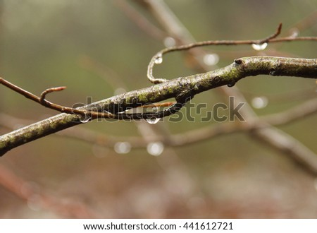 close photo of drops of water on the twig