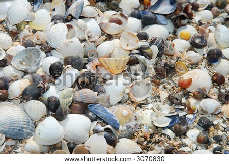 Close shot of sea shells. Suitable for background. - stock photo