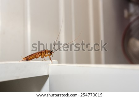 Close up a cockroach on white cupboard in the kitchen - stock photo