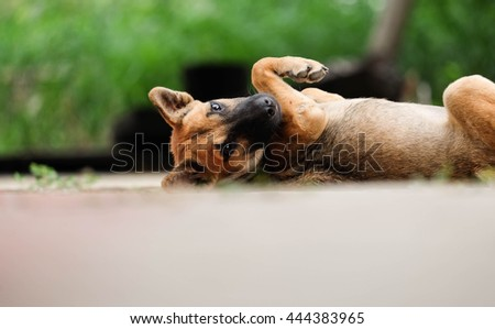 close up a little dog and looking camera - stock photo