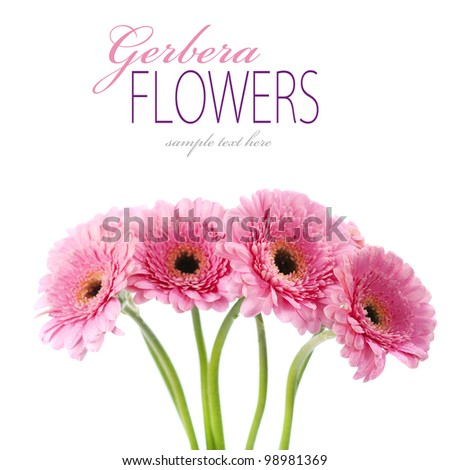 Close up abstract of colorful pink daisy gerbera flowers (with sample text) - stock photo