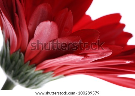 Close up abstract of colorful red daisy gerbera flower - stock photo