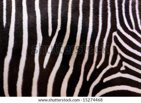 Close up abstract photo of zebra stripes - stock photo