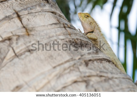 Close-up Asian chameleon on the stump looking camera. - stock photo