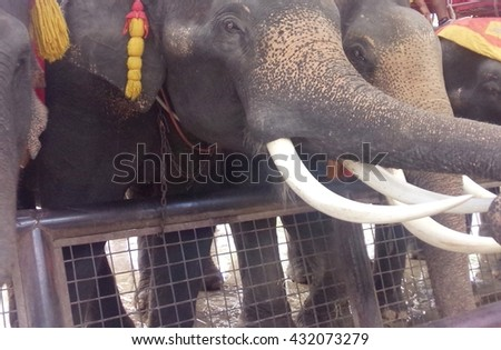 Close up Asian Elephant front view at Ayutthaya in Thailand - stock photo