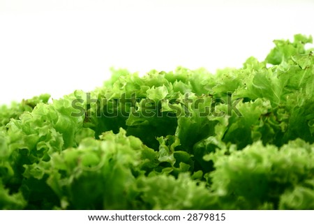 Close up at green fresh iceberg lettuce good as background