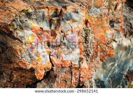 Close Up at Petrified Forest National Park - stock photo