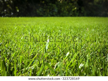 close up background of beautiful green grass pattern from golf course at sunset time - stock photo