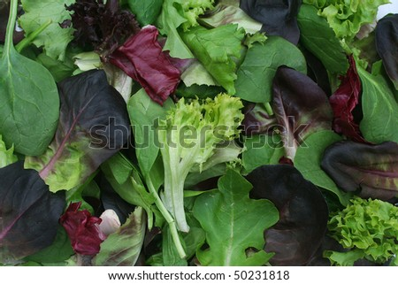 Close Up Background of Mixed Green Lettuce - stock photo