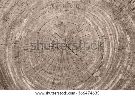 close-up background of wooden cut texture - stock photo