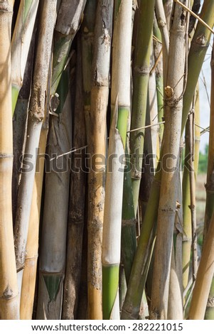 close up bamboo