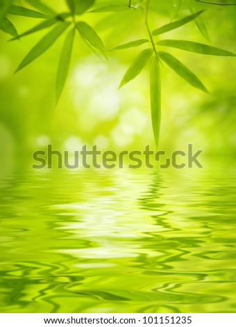 Close up bamboo leaves with water reflection, soft focus - stock photo