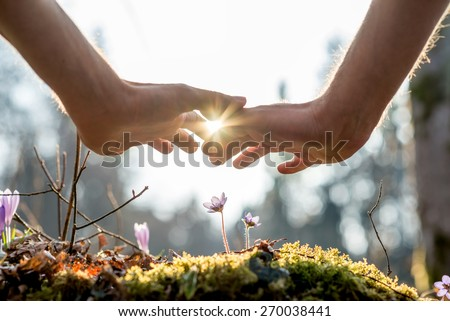 Close up Bare Hand of a Man Covering Small Flowers at the Garden with Sunlight Between Fingers. - stock photo