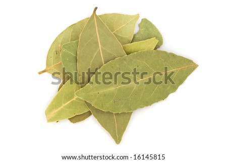 Close-up bay leaf on white