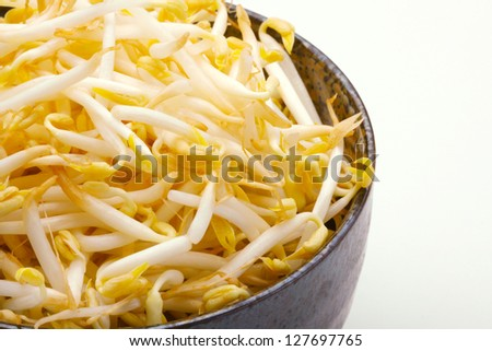 Close up beansprout in white background - stock photo