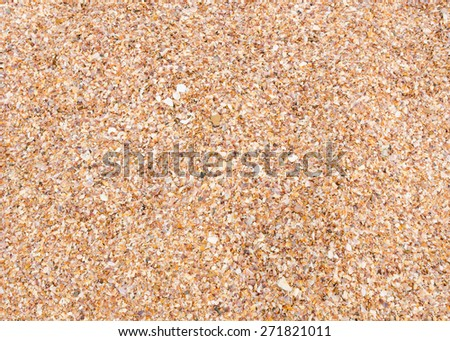 close up beautiful background and texture of nature sea shell pattern on a sand beach in the summer - stock photo