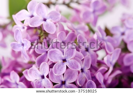 close-up beautiful lilac background