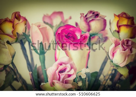 Close up,Beautiful rose flower.Style vintage tone