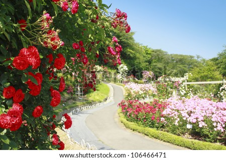 Rose garden stock images royalty free images vectors - Beautiful rose flower garden ...