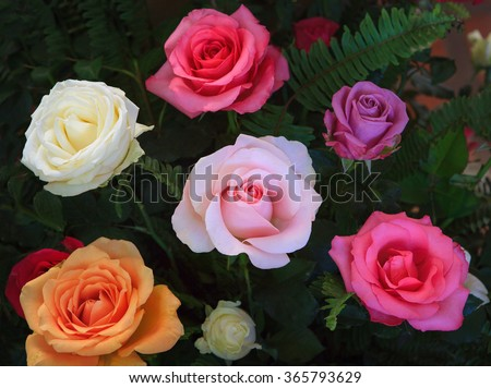 close up beautiful variety color of blooming roses flower bouquet decorated with green leaves plant - stock photo