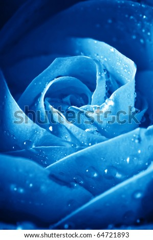 close-up beautiul blue rose with water drops - stock photo