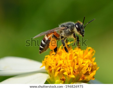 Close up  bees on  flower - stock photo