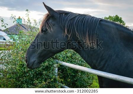 Close up black horse on farm in autumn