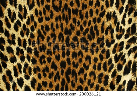 Close up black spots of a leopard  - stock photo