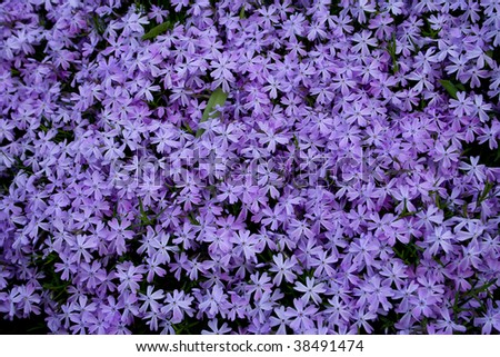 Close up blooming lilac flowers . lilac background - stock photo