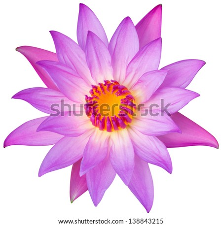 Close up blooming water lily or lotus flower isolated on white - with path - stock photo