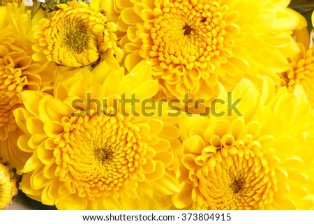 Close-up bouquet of yellow flowers. - stock photo
