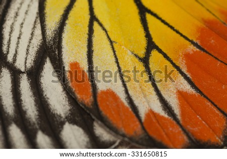 Close up butterfly wing - stock photo